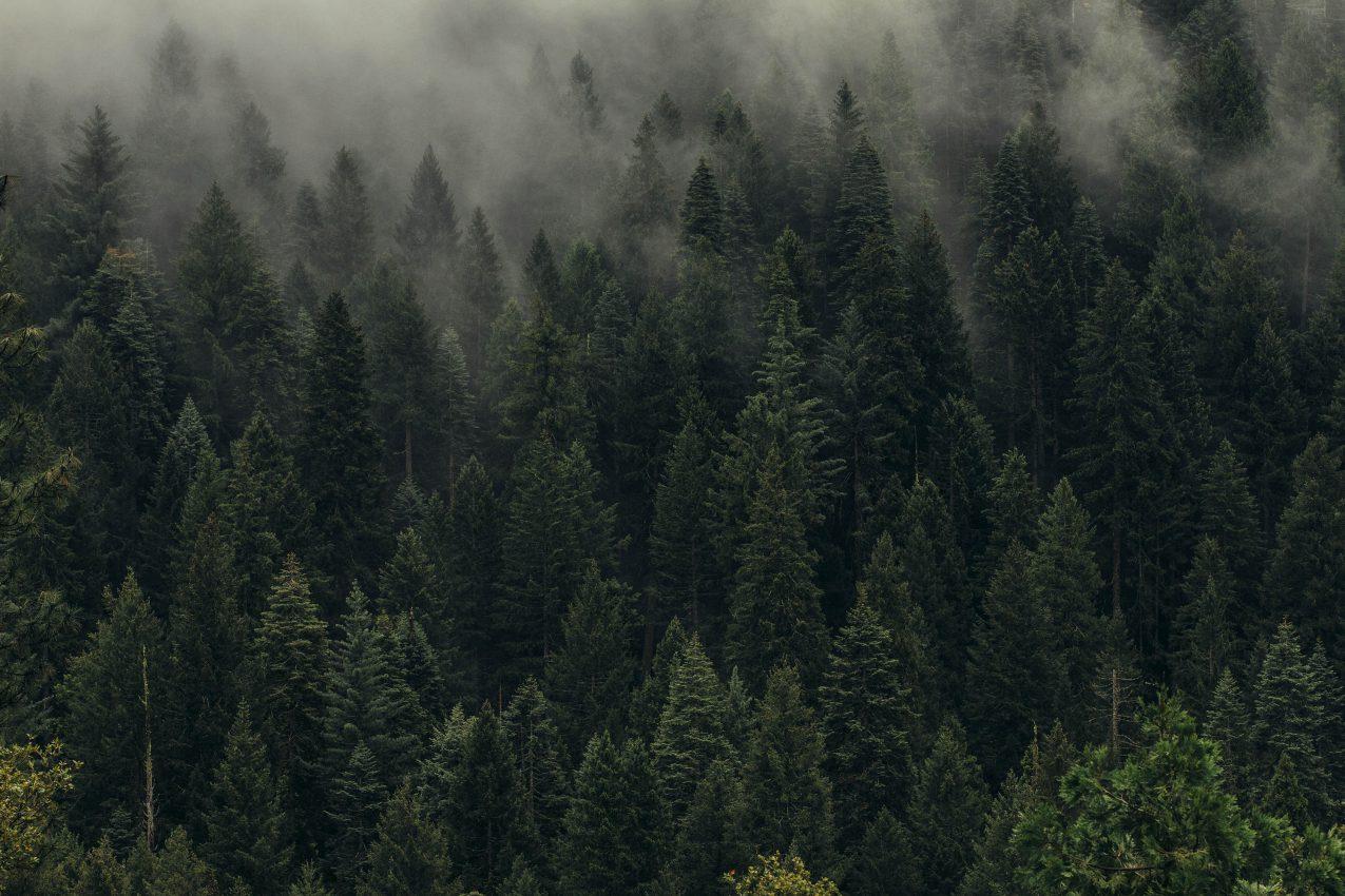 Spandau for Forest